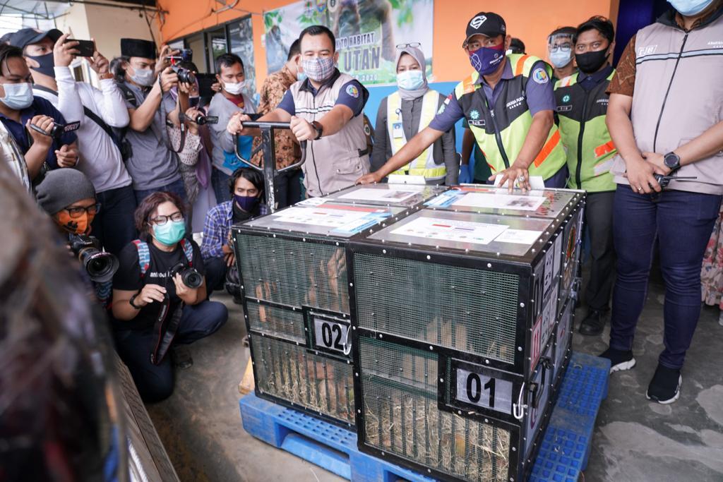 Orangutan Sumatra yang berhasil dipulangkan ke Indonesia tiba di Pusat Karantina dan Rehabilitasi Orangutan di Sibolangit, Kabupaten Deli Serdang, Jumat (18/12). (fornews.co/ppid menlhk)