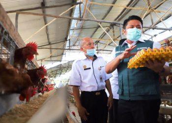 Gubernur Sumsel Herman Deru saat mengunjungi peternakan ayam petelur di SMK Pertanian Pembangunan Negeri Sembawa, Kabupaten Banyuasin, Rabu (24/2/2021). (fornews.co/humas provinsi sumsel)